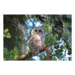 Wild Hoot Owl Staring in the Forest Photo Print