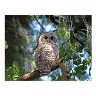 Wild Hoot Owl Staring in the Forest Postcard