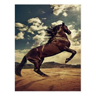 Wild Horse Desert Postcard