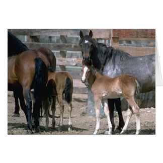 Wild Horse Families Greeting Card