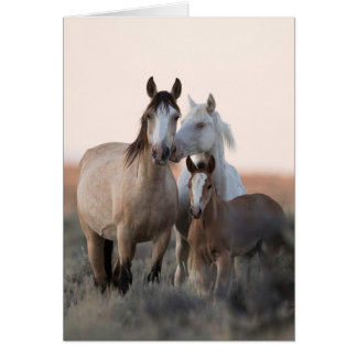 Wild Horse Greeting Card - Wild Family Before Dawn
