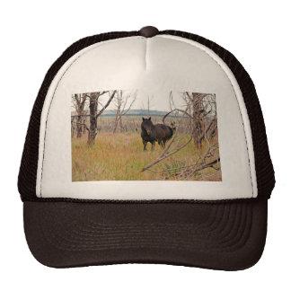 wild horse in Mesa Verde Trucker Hat