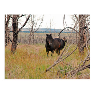 wild horse in Mesa Verde Post Cards