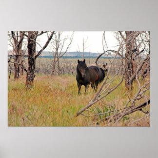 wild horse in Mesa Verde poster