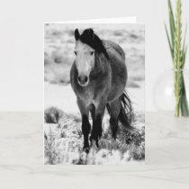 WILD HORSE OF UTAH Folded Greeting Card