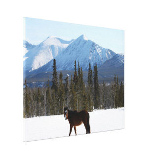 Wild Horse on Alaska Highway Stretched Canvas Prints