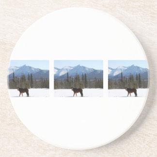 Wild Horse on Alaska Highway Sandstone Coaster