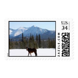 Wild Horse on Alaska Highway Stamp