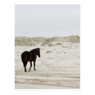 Wild Horse on Corolla Beach Postcard
