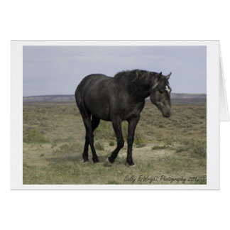 Wild Horse Photography Note Card Design 5