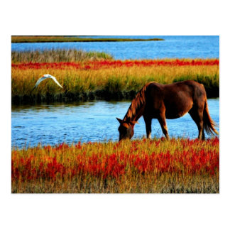 Wild horse postcards
