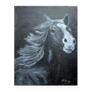 wild horse postcard