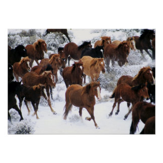 Wild Horse Running on Snow Poster