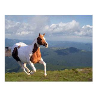 Wild Horse Spirit Postcard
