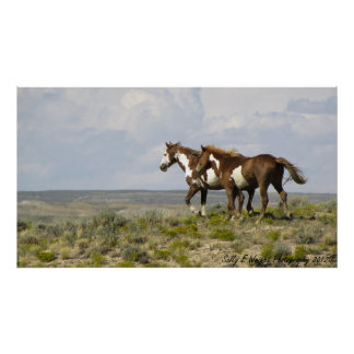 Wild Horse Stallions Print/Poster Poster