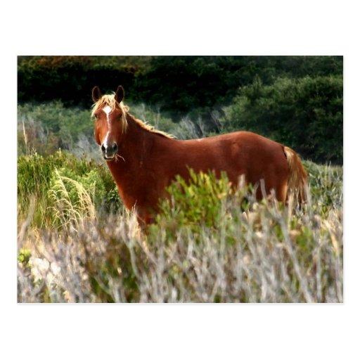 Wild Horse Staredown Postcard