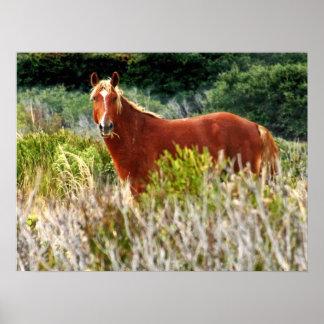 Wild Horse Staredown Poster