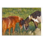 Wild Horses at Theodore Roosevelt National 2 Card