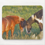 Wild Horses at Theodore Roosevelt National 2 Mouse Pad