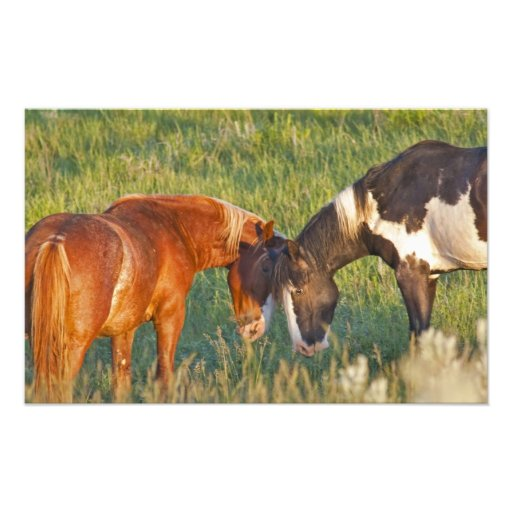 Wild Horses at Theodore Roosevelt National 2 Photo Print