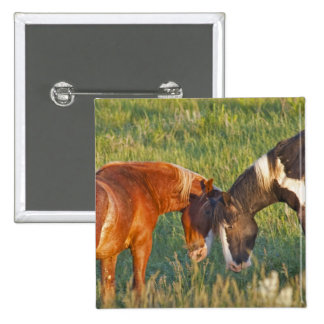 Wild Horses at Theodore Roosevelt National 2 Pinback Button