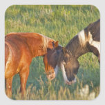 Wild Horses at Theodore Roosevelt National 2 Square Sticker