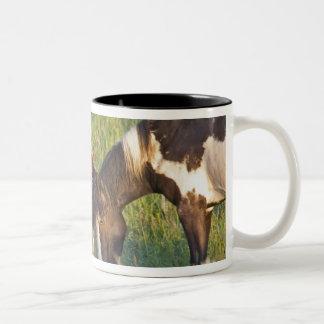 Wild Horses at Theodore Roosevelt National 2 Two-Tone Coffee Mug