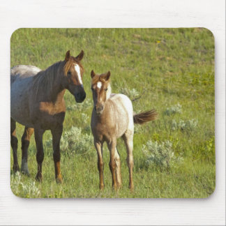 Wild Horses at Theodore Roosevelt National Mouse Pad