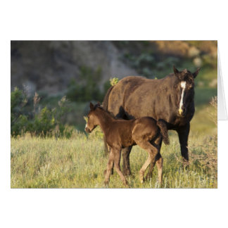 Wild Horses at Theodore Roosevelt National Park Card