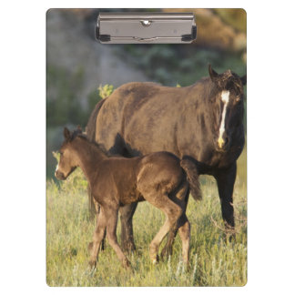 Wild Horses at Theodore Roosevelt National Park Clipboard