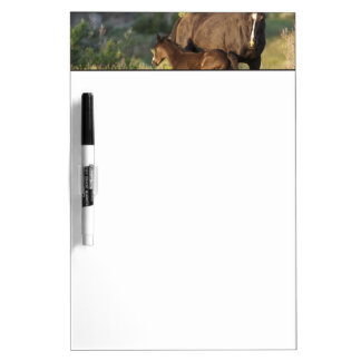 Wild Horses at Theodore Roosevelt National Park Dry-Erase Board
