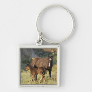 Wild Horses at Theodore Roosevelt National Park Key Chains