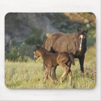 Wild Horses at Theodore Roosevelt National Park Mouse Pad