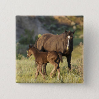 Wild Horses at Theodore Roosevelt National Park Pinback Button