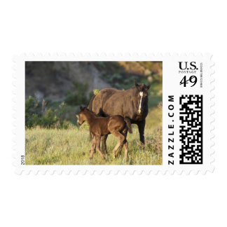 Wild Horses at Theodore Roosevelt National Park Postage