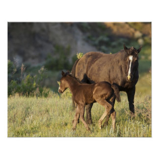 Wild Horses at Theodore Roosevelt National Park Poster
