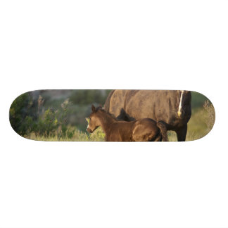 Wild Horses at Theodore Roosevelt National Park Skateboard