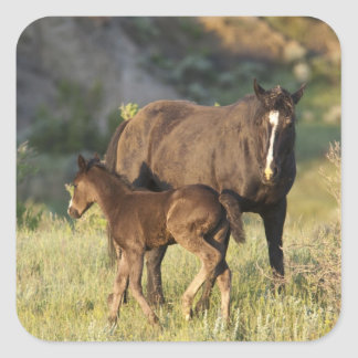 Wild Horses at Theodore Roosevelt National Park Square Sticker