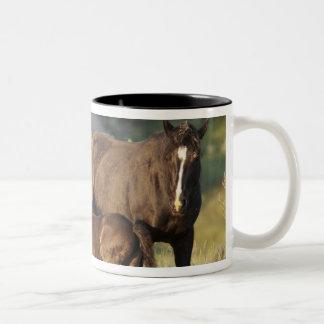 Wild Horses at Theodore Roosevelt National Park Two-Tone Coffee Mug