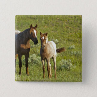 Wild Horses at Theodore Roosevelt National Pinback Button