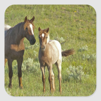 Wild Horses at Theodore Roosevelt National Square Sticker