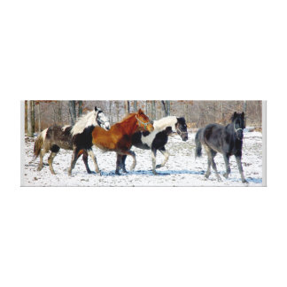 Wild Horses Canvas Stretched Canvas Prints
