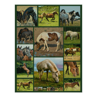 Wild Horses Collage Poster