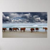 Wild Horses Corolla NC Poster