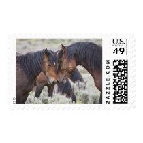 Wild Horses (Equus caballus) in sagebrush near Postage