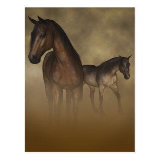 Wild Horses, Fast Friends Postcard