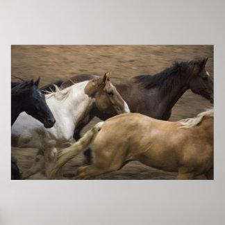 Wild Horses fine art print
