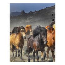 Wild Horses Flyer
