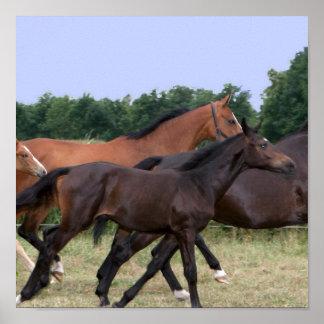 Wild Horses Galloping Print