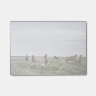 Wild horses in green field post-it notes